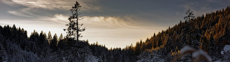 Waldhandwerk®